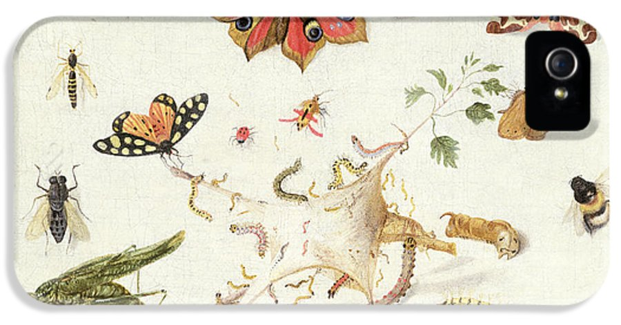 Insect IPhone 5 Case featuring the painting Study Of Insects And Flowers by Ferdinand van Kessel