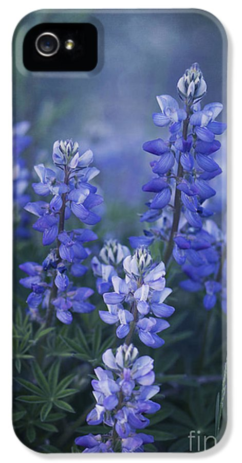 Lupin IPhone 5 Case featuring the photograph Summer Dream by Priska Wettstein