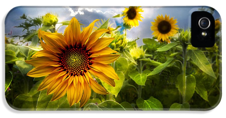 Clouds IPhone 5 Case featuring the photograph Sunflower Dream by Debra and Dave Vanderlaan