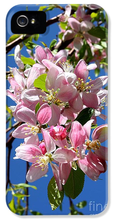 Blossoms IPhone 5 Case featuring the photograph Sunlight On Spring Blossoms by Carol Groenen