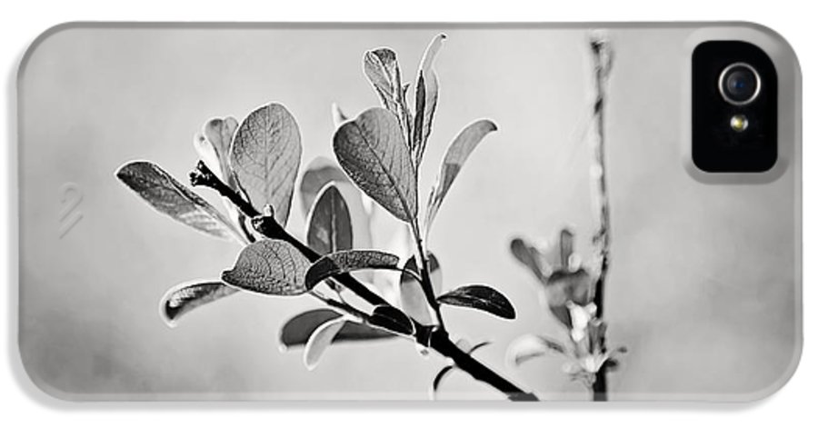 Art IPhone 5 Case featuring the photograph Sunlit Sprig Of Leaves In Black And White by Natalie Kinnear
