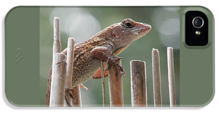 Caught The Lizard IPhone 5 Case featuring the photograph Sunning Lizard by Belinda Lee