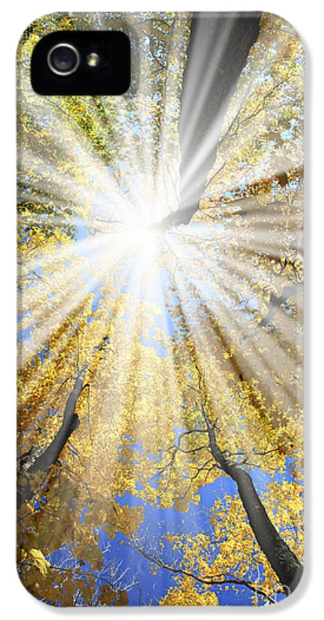 Autumn IPhone 5 Case featuring the photograph Sunrays In The Forest by Elena Elisseeva