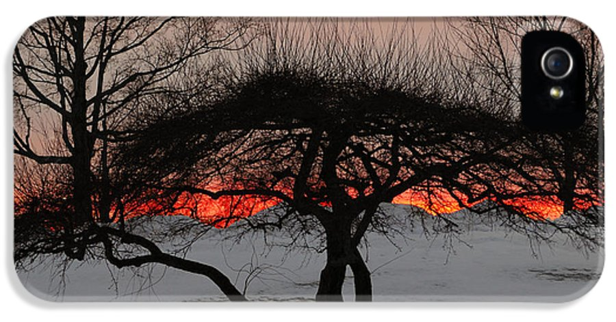 Tree IPhone 5 Case featuring the photograph Sunroof by Luke Moore