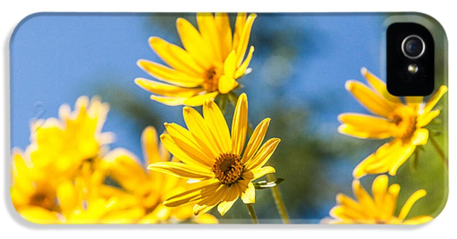 Flowers IPhone 5 Case featuring the photograph Sunshine by Chad Dutson