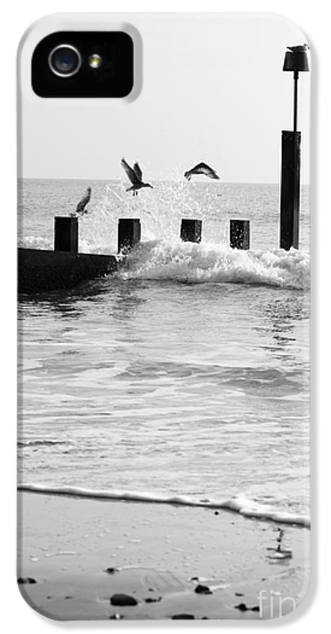 Autumn IPhone 5 Case featuring the photograph Surprised Seagulls by Anne Gilbert