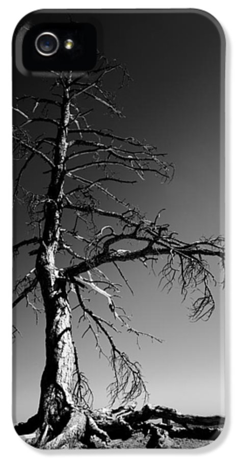 Survival Tree IPhone 5 Case featuring the photograph Survival Tree by Chad Dutson
