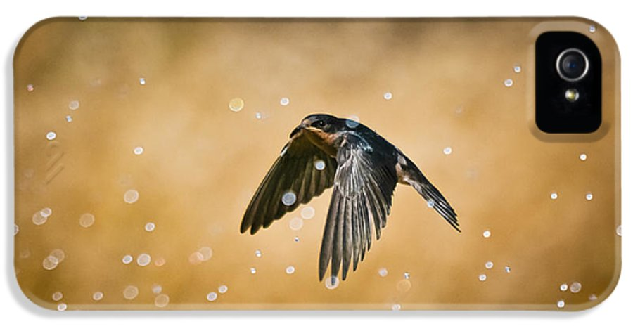 Animal IPhone 5 Case featuring the photograph Swallow In Rain by Robert Frederick