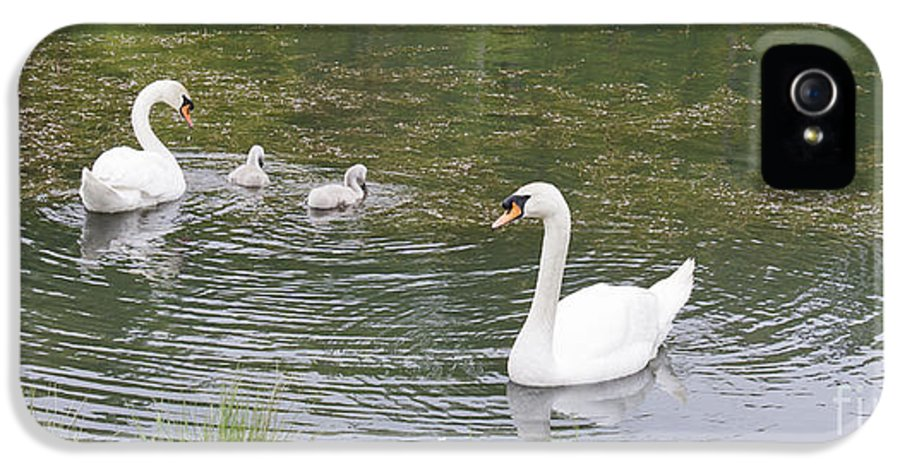 Swan IPhone 5 Case featuring the photograph Swan Family by Teresa Mucha
