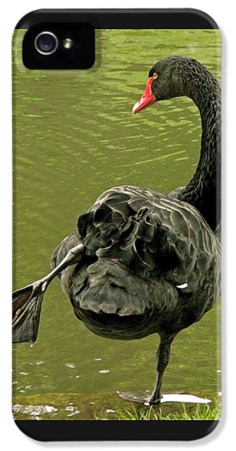 Swan IPhone 5 Case featuring the photograph Swan Yoga by Rona Black