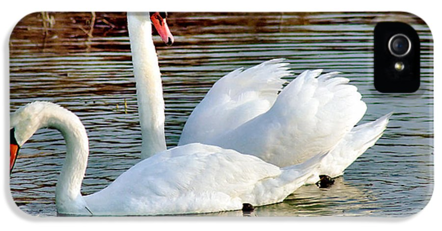 Swans IPhone 5 Case featuring the photograph Swans by Gary Heller