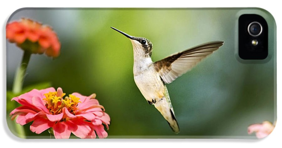 Hummingbird IPhone 5 Case featuring the photograph Sweet Promise Hummingbird by Christina Rollo
