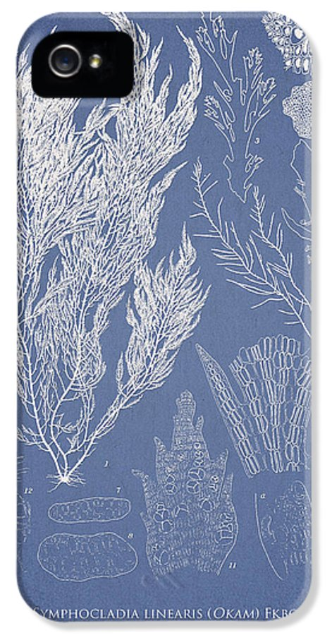 Algae IPhone 5 Case featuring the digital art Symphocladia Linearis by Aged Pixel