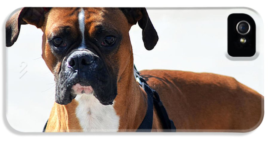 Boxer IPhone 5 Case featuring the photograph The Challenge by Camille Lopez