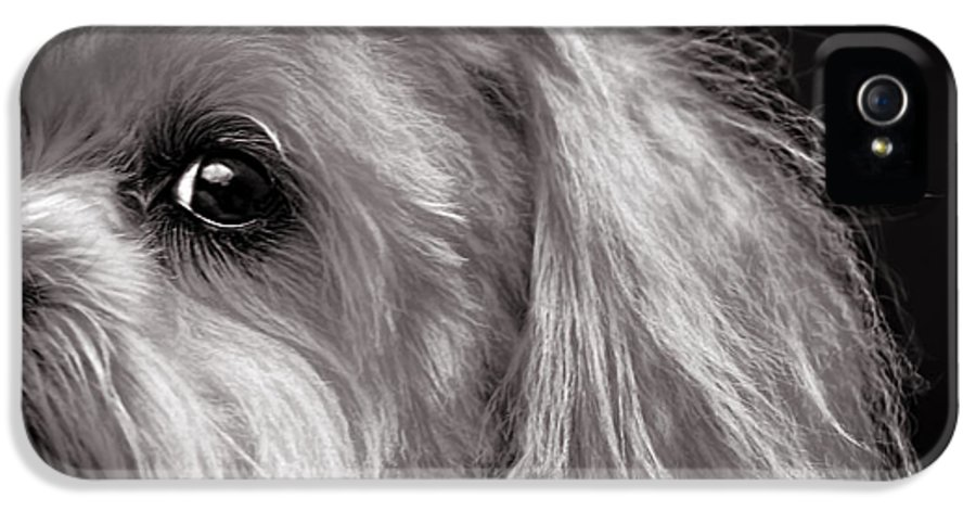Dog IPhone 5 Case featuring the photograph The Dog Next Door by Bob Orsillo