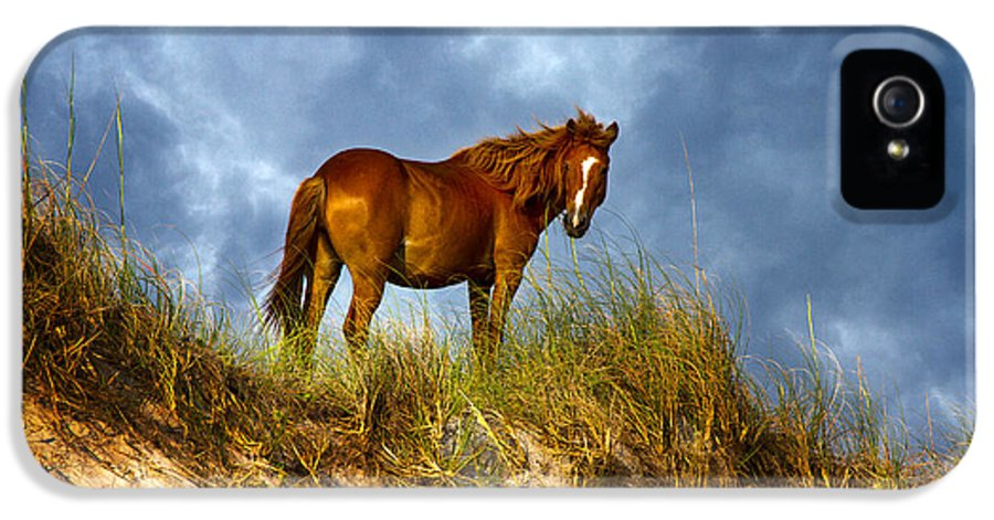 Horse IPhone 5 Case featuring the photograph The Dune King by Betsy Knapp