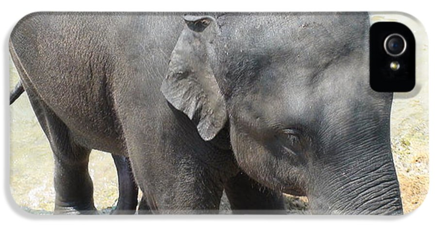 Asian Elephant IPhone 5 Case featuring the photograph Asian Elephant Close Up by Colin Smeaton