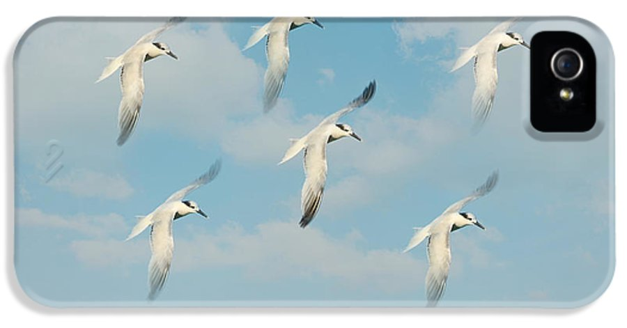 Seagull IPhone 5 Case featuring the photograph The Flight by Kim Hojnacki