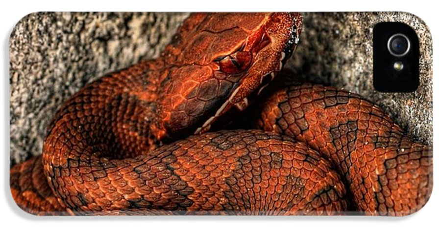 Cottonmouth IPhone 5 Case featuring the photograph The Florida Cottonmouth by JC Findley