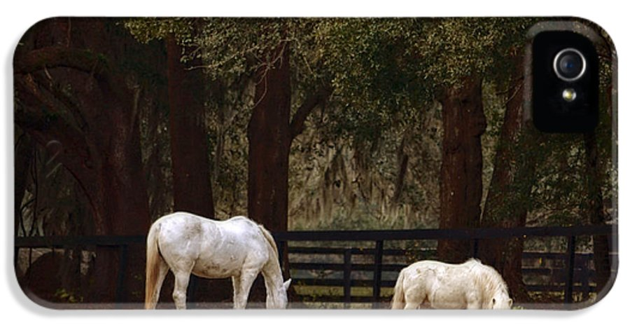 The Horse And The Pony IPhone 5 Case featuring the photograph The Horse And The Pony - Standard Size by Mary Machare