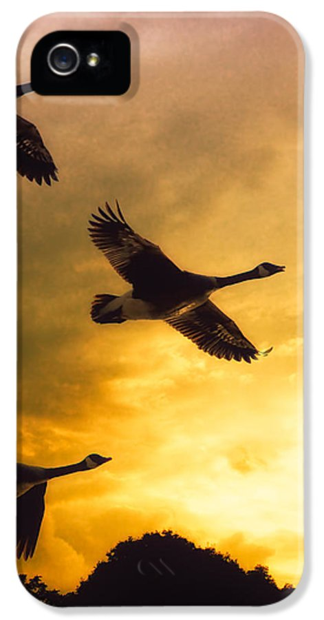 Geese IPhone 5 Case featuring the photograph The Journey South by Bob Orsillo