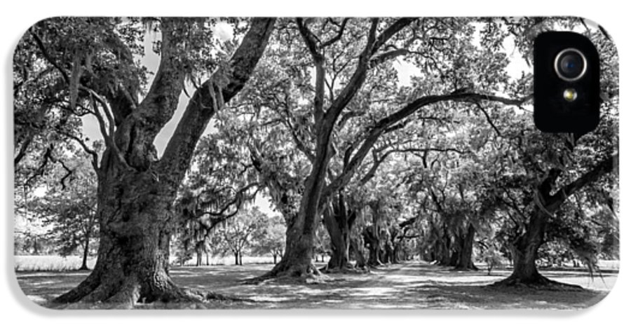 Evergreen Plantation IPhone 5 Case featuring the photograph The Lane Bw by Steve Harrington