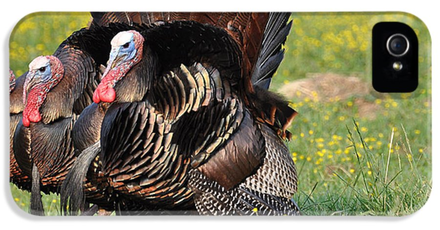 Turkey IPhone 5 Case featuring the photograph The Line Up by Todd Hostetter