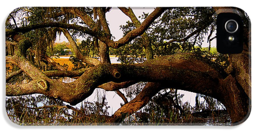 The Old Tree At The Ashley River In Charleston IPhone 5 Case featuring the photograph The Old Tree At The Ashley River In Charleston by Susanne Van Hulst