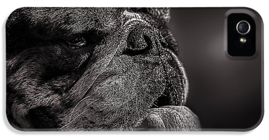 Dog IPhone 5 Case featuring the photograph The Other Dog Next Door by Bob Orsillo