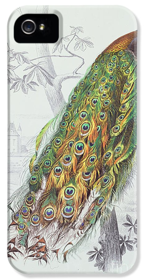 Peacock IPhone 5 Case featuring the painting The Peacock by A Fournier