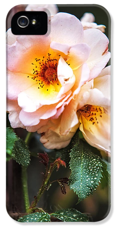 Rose IPhone 5 Case featuring the photograph The Rose With Your Name. Park Of De Haar Castle by Jenny Rainbow