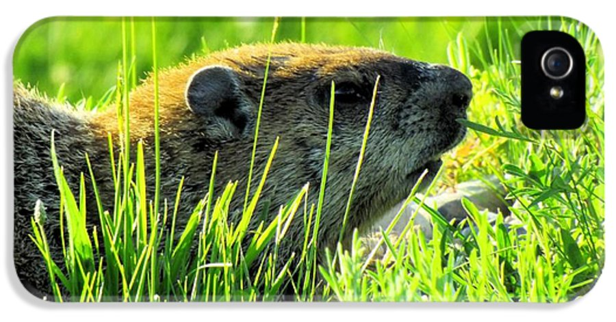 Groundhog IPhone 5 Case featuring the photograph The Sound Of Silence by Robyn King