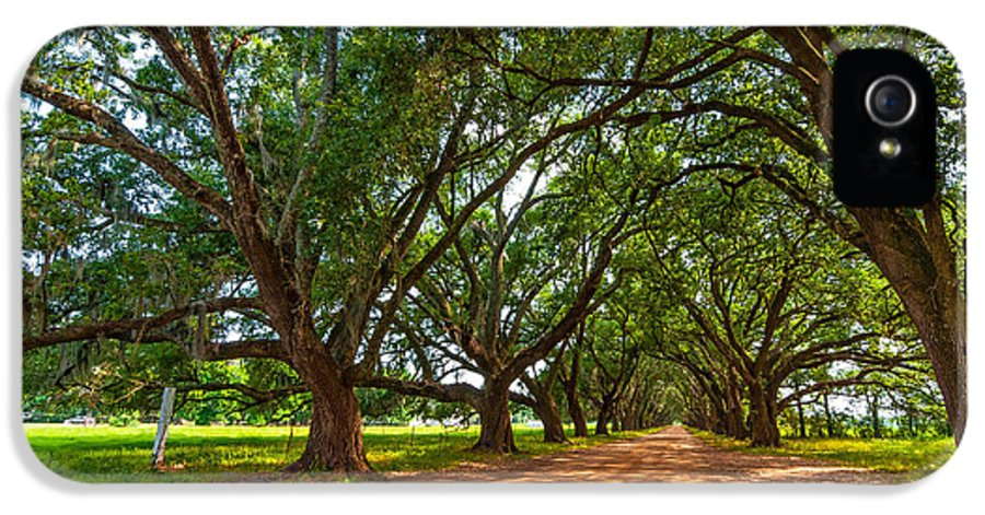 Evergreen Plantation IPhone 5 Case featuring the photograph The Southern Way by Steve Harrington