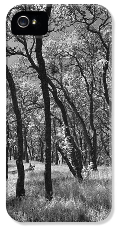 Mt. Diablo State Park IPhone 5 Case featuring the photograph The Way You Move Me by Laurie Search