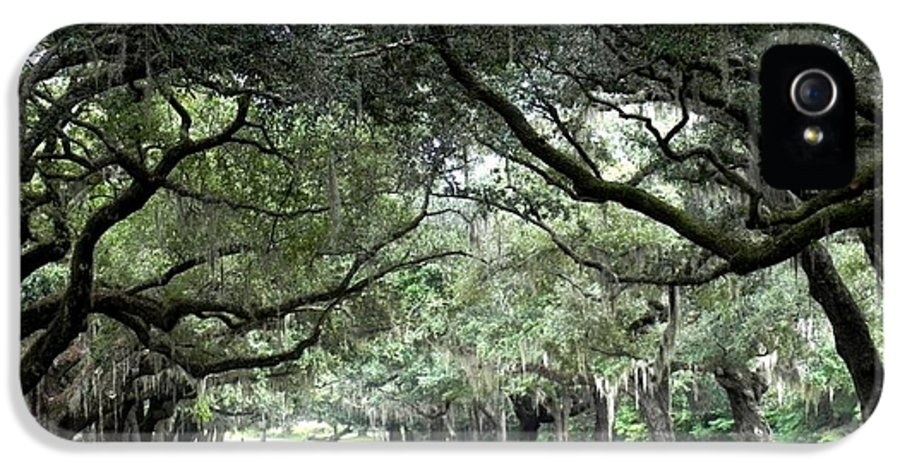 Oak Lined Pathway Into House IPhone 5 Case featuring the photograph This Is The South by Patricia Greer