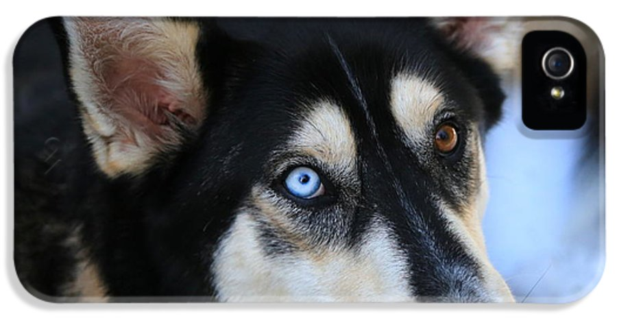 Dog IPhone 5 Case featuring the photograph Those Eyes by Carol Groenen