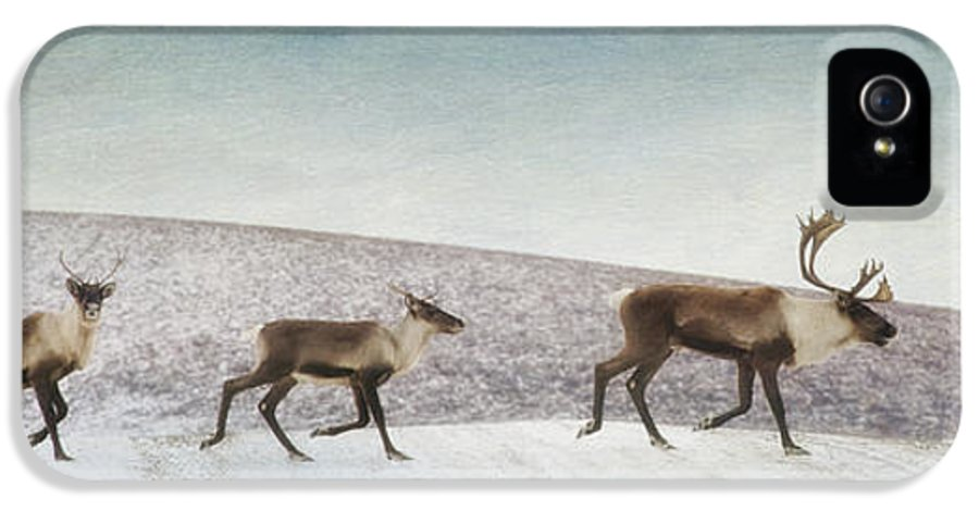Animal IPhone 5 Case featuring the photograph Three Caribous by Priska Wettstein