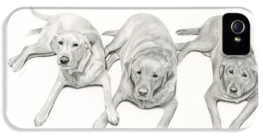 Labradors IPhone 5 Case featuring the drawing Three Of A Kind by Sarah Batalka
