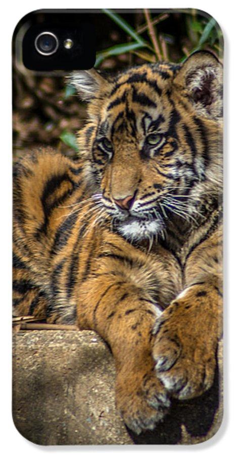 2014 IPhone 5 Case featuring the photograph Tiger by Randy Scherkenbach