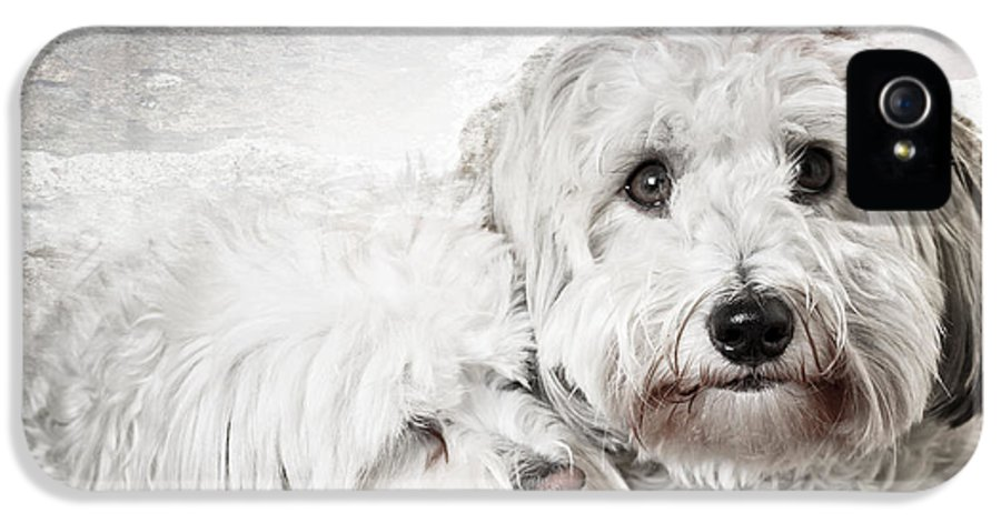Dogs IPhone 5 Case featuring the photograph Together by Elena Elisseeva