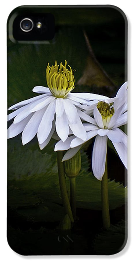 Floral IPhone 5 Case featuring the photograph Togetherness by Holly Kempe