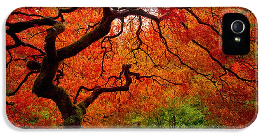 Portland IPhone 5 Case featuring the photograph Tree Fire by Darren White