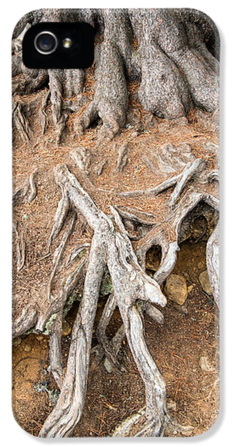 Tree Root IPhone 5 Case featuring the photograph Tree Root by Matthias Hauser