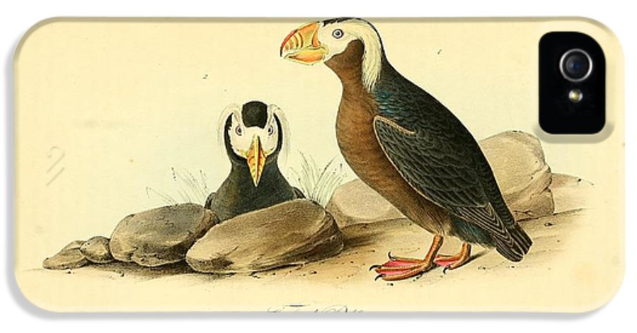 Audubon IPhone 5 Case featuring the painting Tufted Puffins by Philip Ralley