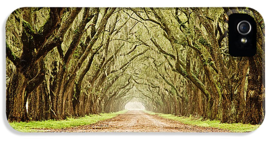 Oak Trees IPhone 5 Case featuring the photograph Tunnel In The Trees by Scott Pellegrin