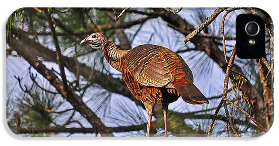Turkey IPhone 5 Case featuring the photograph Turkey In A Tree by Al Powell Photography USA