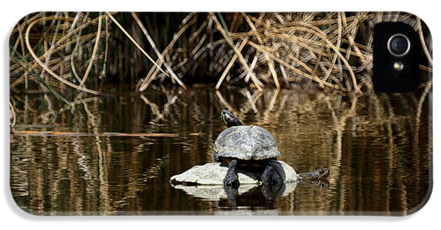 Turtle On Turtle IPhone 5 Case featuring the photograph Turtle On Turtle by Ernie Echols