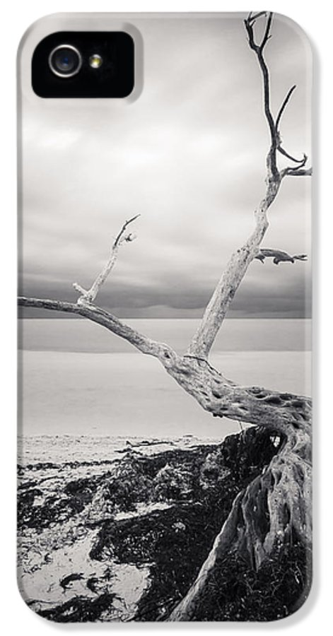 3scape Photos IPhone 5 Case featuring the photograph Twisted by Adam Romanowicz