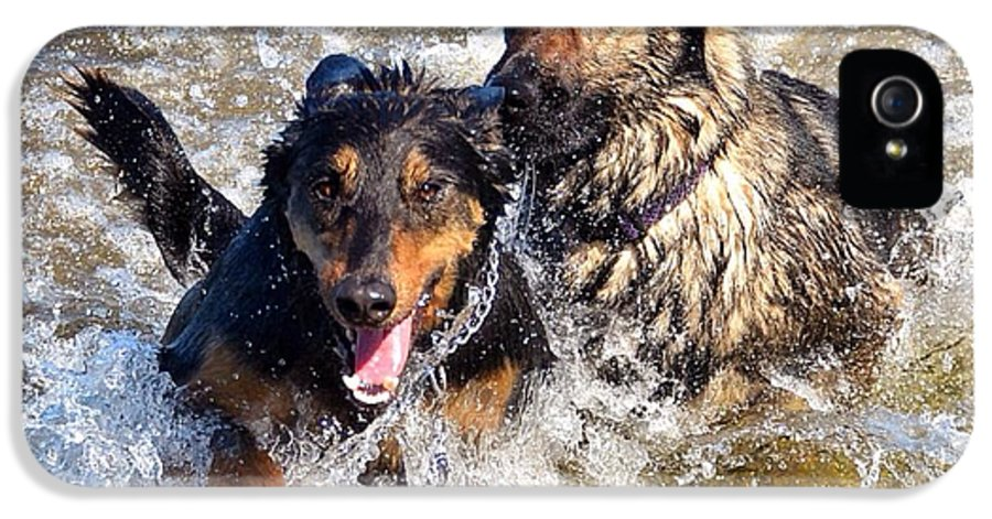 Dogs IPhone 5 / 5s Case featuring the photograph Two Of A Kind by Nikki McInnes