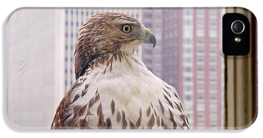 Hawk IPhone 5 Case featuring the photograph Urban Red-tailed Hawk by Rona Black